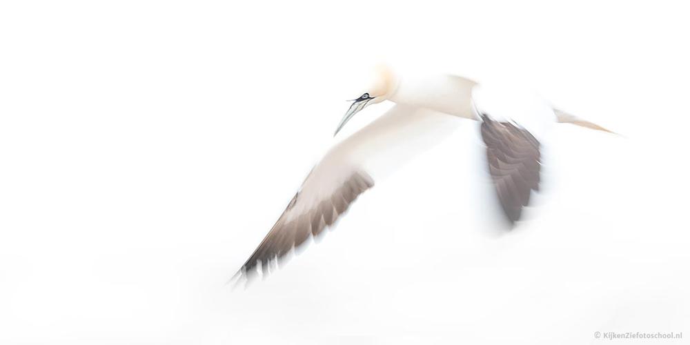 Dierenfotografie wildlife Helgoland Jan van Gent